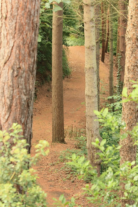 Missing the Analytics Forest for the Trees - Image 1