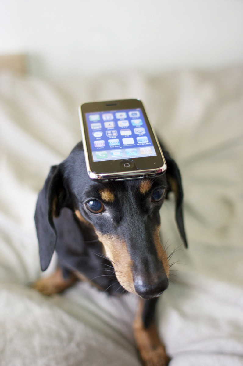Apps for Pet Lovers - Image 1